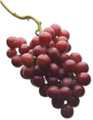 Picture of grapes.